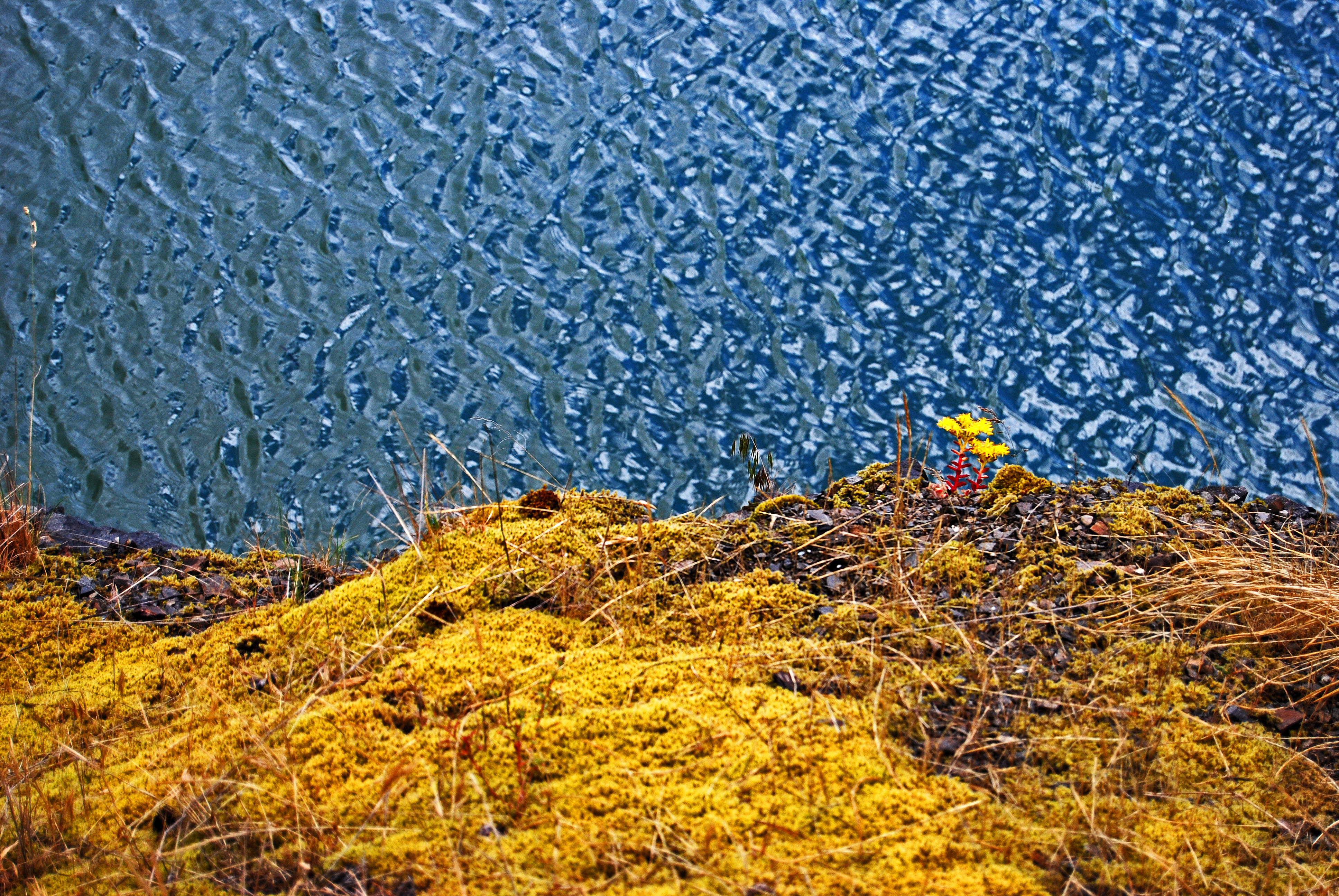 """""""Plants (OR 39-1, Cougar Lake)"""" © Keith Moul"""