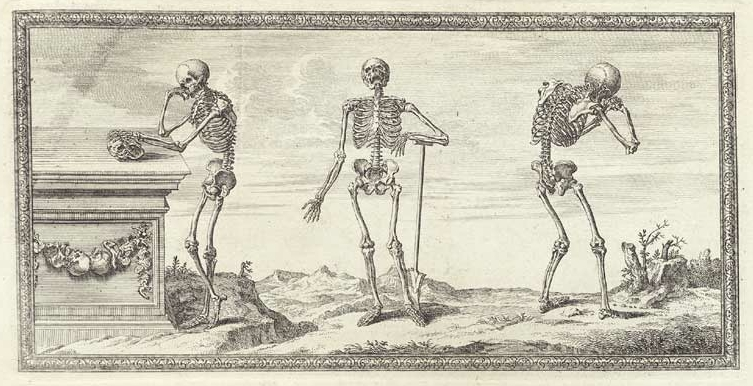 """From """"Osteographia"""" by William Cheselden (1733)"""